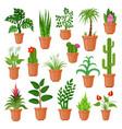 house pot plants vector image