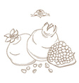 Outline hand drawn pomegranate flat style vector image