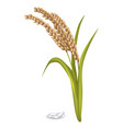 paddy ears with rice grain pile on white poster vector image vector image