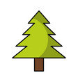 pine tree isolated icon vector image vector image