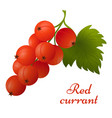 red currant with leaves icon vector image vector image