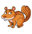 squirrel with sleepy eyes vector image