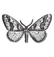 male winter moth vintage vector image vector image