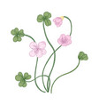 wood sorrel flowers and trifoliate leaves isolated vector image vector image