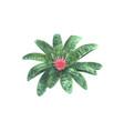aechmea fasciata flower vector image vector image
