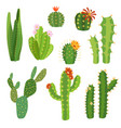 cactus flower bright cacti aloe leaves exotic vector image vector image