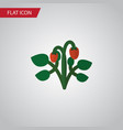 isolated strawberry flat icon berry vector image