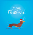 merry christmas funny cartoon dancing dog sings vector image vector image