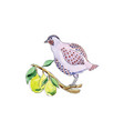partridge in pear tree for 12 days christmas vector image vector image