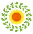 beautiful sunflower isolated on a white background vector image vector image