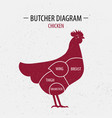 cut of chicken poster butcher diagram vector image
