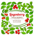lingonberry elements set vector image