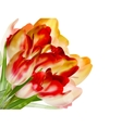 Red tulips and bokeh background EPS 10 vector image vector image