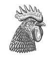 rooster head in engraving style design element vector image vector image