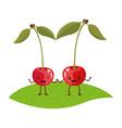white background with realistic pair of cherry vector image