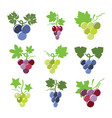 colorful icons of grapes vector image vector image
