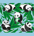funny panda on the background of the bamboo branch vector image