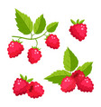 set of cartoon raspberry with green leaves vector image