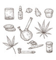 sketch cannabis medical marijuana leaves weed vector image
