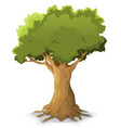 spring oak tree vector image