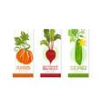 fresh vegetable juice labels set pumpkin vector image