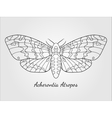 Hand drawn hawk moth silhouette vector image vector image