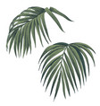hand drawn palm leaves isolated on white vector image vector image