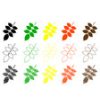 walnut leaf color set vector image