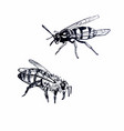 bee and wasp line drawing vector image vector image
