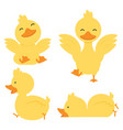 cute yellow duck character set vector image vector image
