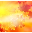 Delicate autumn sun with glare on gold sky vector image vector image