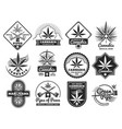 hashish rastaman hemp cannabis marijuana vector image