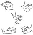 Achatina snail vector image vector image
