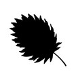 annual nettle leaf vector image vector image