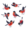 Bullfinches vector image vector image