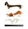 dachshound basset greyhound vector image vector image