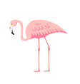 colorful pink decorative flamingo isolated on vector image