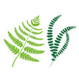 greenery collection leaves vector image