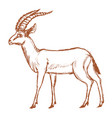 antelope african animal vector image