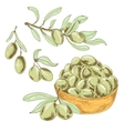 Collection of olives vector image vector image