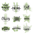 spice or herb lettering with food condiment sketch vector image
