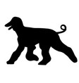 afghan hound silhouette vector image vector image