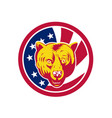american brown bear usa flag icon vector image
