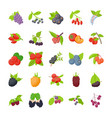 berry fruits flat icons vector image