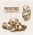 digital detailed line art potato vector image
