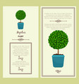 greeting card with myrtus plant vector image vector image