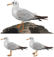 Set of seagulls isolated on white vector image