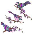 Ste of hand drawn ornate birds on sakura branches vector image