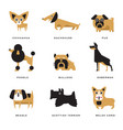 different dogs breeds characters set of vector image vector image