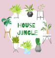 home jungle plants in scandinavian style vector image vector image